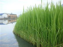 満濃池のユル抜きが生み出すもの。