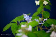 季節の宝石 〜紫陽花の記憶〜
