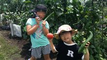 夏の収穫祭(*´∀`)