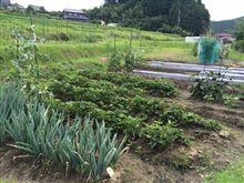 家庭菜園収穫のお手伝い!!(^^)!