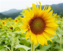 Flower with  ...  ~ 僕らはみんな生きているⅡ ~