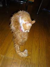 久々に猫シャンプー、Nワンにオープンシール