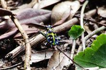 山で見かけた変な虫