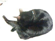 ネコが布団を占領した~
