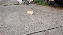 淡路島仮屋漁港の猫