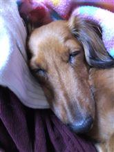 ワンコも眠る秋の夜長かな!!ようやく涼しくなりそうですね。