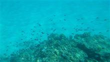 のぶを家 夏の家族旅行IN沖縄 沖縄のサンゴと熱帯魚たち~沖縄本土へ戻る