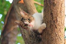 木登りが得意なニャンコ♪
