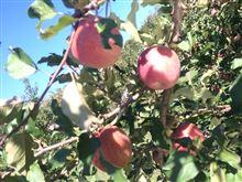 信州リンゴ狩りツーリング(≧∇≦)
