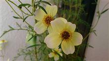 花にも包帯
