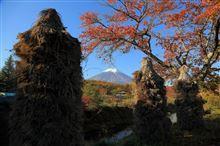 パノラマ台~忍野富士と10月26日のカワセミ