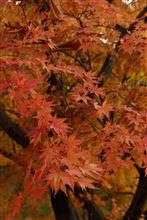 信州に紅葉を見に行く