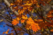 紅葉狩りハイキング&ツーリング!西沢渓谷から奥多摩湖へ