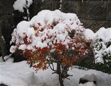 甘く見ていた積雪量