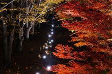 紅葉ライトアップ ~上田城跡公園~