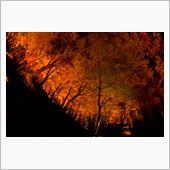 香嵐渓へ紅葉狩りへ