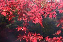 紅葉狩りハシゴ!