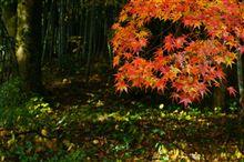 実家周辺の紅葉