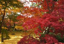 やっぱ紅葉は京都でしょう!