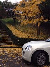 神山森林公園へドライブ