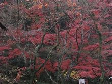 岩屋堂公園。。。瀬戸しなの。。。S子。。。紅葉。。。