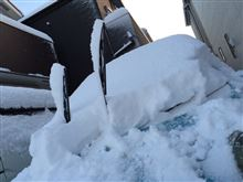 名古屋大雪です(≧∇≦)