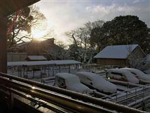 雪、雪だ! 雪が降ったよぉ~!!!