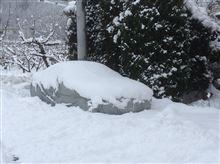 雪積もった〜。