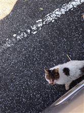 2014年最後  公園猫