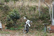 新しいバイク!