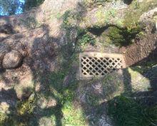 昨日の木のドア
