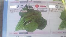 野菜の名前シリーズ しばらく編