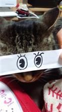 猫モンタージュ