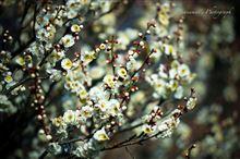 公園で春を感じて