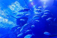 blue hawaii ?