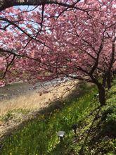 河津桜ツーリング