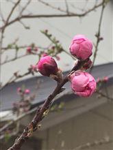 春はすぐそこ( ̄▽ ̄)