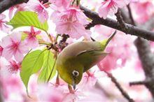春の景色を求めて