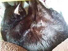 ネコは椅子に戻ってた~