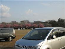 国立歴史民族博物館と佐倉城址公園散策