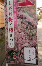 京都城南宮の梅