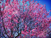 春ですね。
