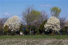 春のカメラ散歩