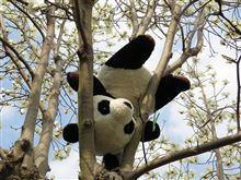 木蓮と逆さパンダの謎…