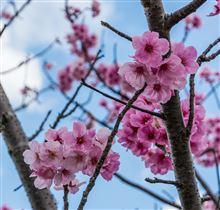 春は別れの季節、桜の季節。