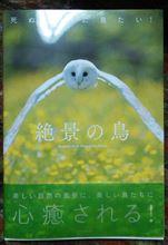 ☆『絶景の鳥』☆