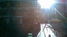 秋葉原も桜が咲いてきました(≧▽≦)