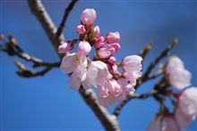 TOYOゴムと桜2015と長いおまけ<追記あり>