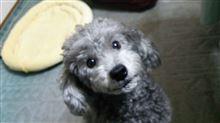 ペット-1:初めての愛犬