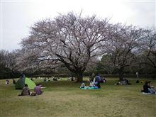神奈川でお花見♪